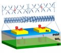 Tunnel electroresistance through organic ferroelectrics
