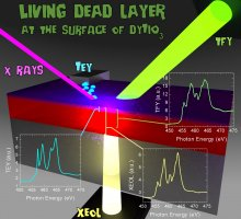 Living dead layer at the surface of a Mott insulator